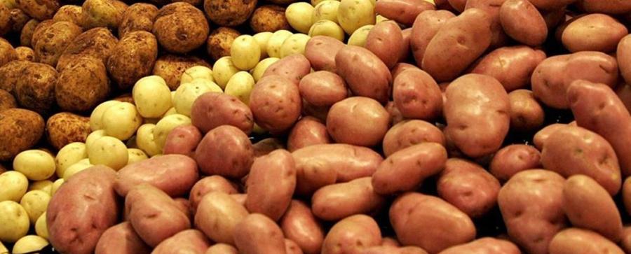 Как насосная станция помогла выращивать картофель в пустыне