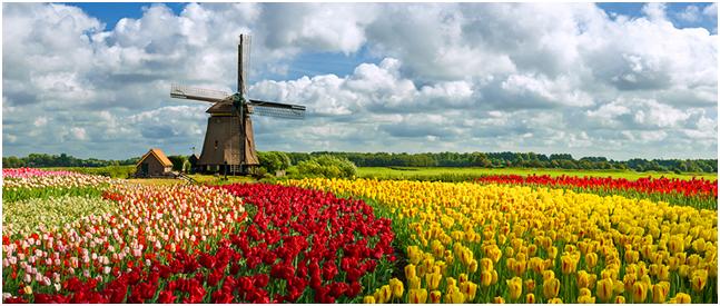 DP-Pumps знакомит украинских инженеров с Голландией, ее пейзажами и красотами.
